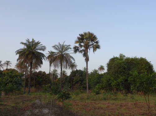 DSC01869.Casamance.Albadar